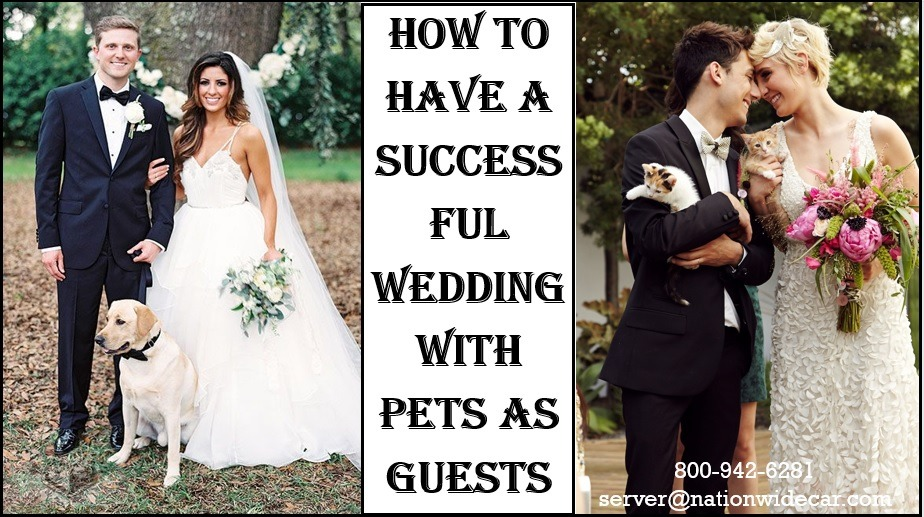 All You Need to Know About Having Pets at Your Wedding